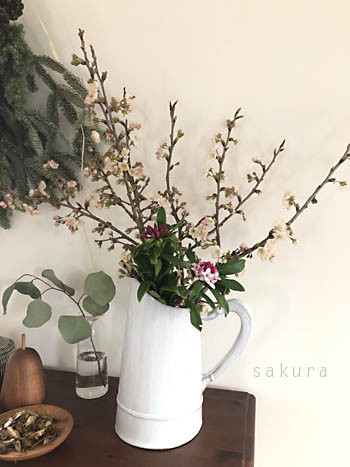 2019sakura